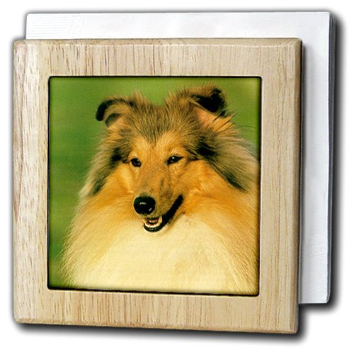 犬Sheltie /シェットランドシープドッグ – シェルティー – タイルナプキンホルダー 6 inch tile napkin holder nh_666_1 6 inch tile napkin holder  B0073V8O5W