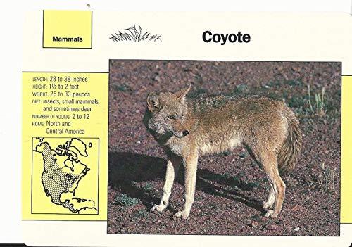 1992 Grolier, Wildlife Adventure Cards, Animals, 2.7 Coyote