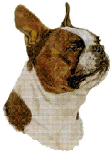 (Brown Boston Terrier Dog Portrait Counted Cross Stitch Pattern)