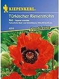 Papaver orientale Türkischer Riesenmohn rot