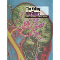 The Kidney at a Glance