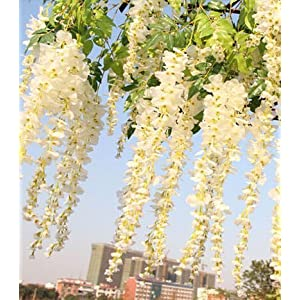 Realistic Romantic Classic Artificial Fake Wisteria Vine Ratta Silk Flowers for Garden Floral Decoration DIY Living Room Hanging Flower Plant Vine Home Party Wedding Simulation Decor (White) 7