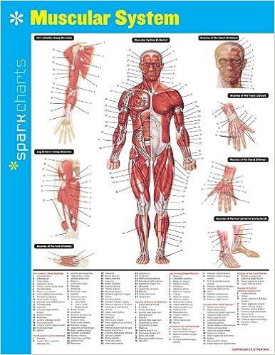 Muscular System SparkCharts: 9781411470576: Medicine & Health ...