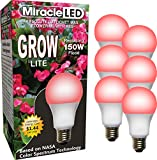 Miracle LED Absolute Daylight MAX Flowering Red LED Grow Lite - Replaces up to 150W - For Intense Flowering and Fruiting of your Indoor Plants and DIY Horticulture & Hydroponic Gardens (604286) 6 Pack