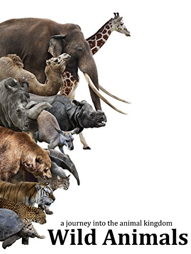 Wild Animals - A journey into the animal kingdom