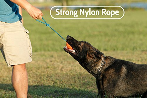 The Nero Ball Classic On a Rope Reward and Exercise Toy