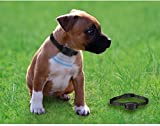 Oternal-No-Bark-Dog-Collars-with-Stimulation-of-the-Warning-Sound-and-Vibrationno-shock-an-Pain-free-and-no-Hurt-Dog-training-Collars-for-the-Dogs-Weighing-10-35-lbs-5-Off-for-2-Items