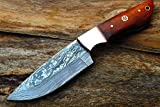 Handmade 4.2''Hunting Skinner knife w/Fine Walnut Wood, Steel Bolsters & Handmade Engrave Leather Sheath Cover UDK-SH-57