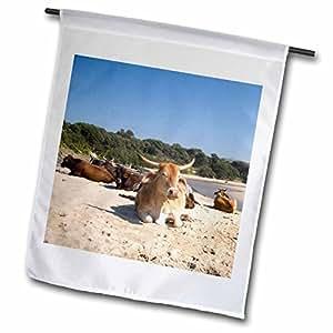 Danita Delimont - Farm Animals - Cows, Farm Animal, Coffee Bay, Transkye, South Africa-AF42 MWR0126 - Micah Wright - 12 x 18 inch Garden Flag (fl_71787_1)