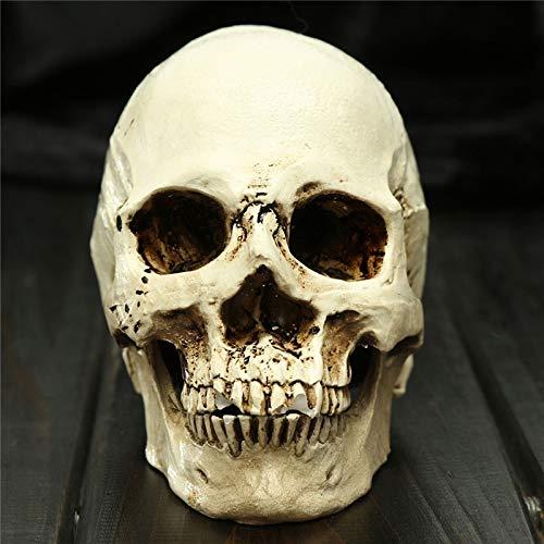 SaveStore Human Skull Resin Replica Model Halloween Home