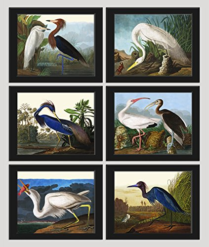 Cheap  Bird Print Set of 6 Art Prints Beautiful James Audubon Great White..