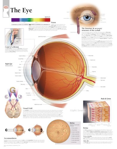 The Eye chart: Laminated Wall Chart