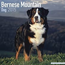 Bernese Mountain Dog Calendar - Only Dog Breed Bernese Mountain Dogs Calendar - 2015 Wall calendars - Dog Calendars - Monthly Wall Calendar by Avonside