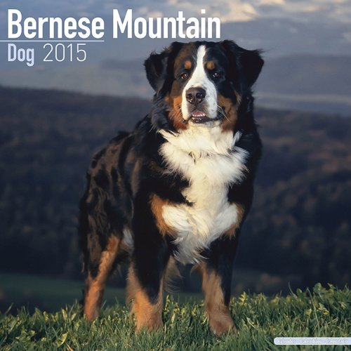 Ebook Bernese Mountain Dog Calendar - Breed Specific Bernese Mountain Dogs Calendar - 2015 Wall calendars ZIP