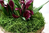 Super Moss 26912 Spanish Moss Preserved, Grass, 8oz (200 cubic inch)