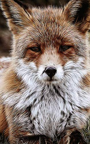 Notebook: Red fox nature wildlife mammal animal predator fox carnivore eurasia arctic fox north by Wild Pages Press