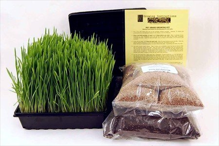 Organic Dog & Cat Wheatgrass Growing Kit for Pet - Dogs Cats & Pets Love To Eat Wheat Grass for Better Health