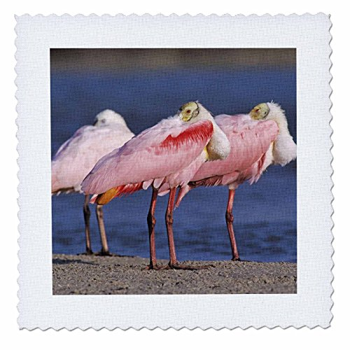 3dRose qs_84594_1 Roseate Spoonbill Bird, Sanibel Island, Florida-Na02 Rnu0758-Rolf Nussbaumer-Quilt Square, 10 by 10-Inch
