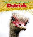 Ostrich, Louise Spilsbury, 1432947303