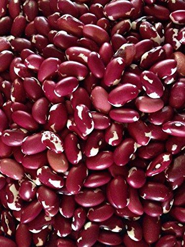 (Heirloom Anasazi Bush Bean Seed, Organically Grown 25+ Seeds )