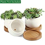Unibene 3 Inch White Ceramic Contemporary Bud Shaped Cactus Succulents Pots with Bamboo Tray and Drainage Hole, Indoor Bonsai Planters Containers, Decor for Home Office Garden Kitchen - 3 Pack