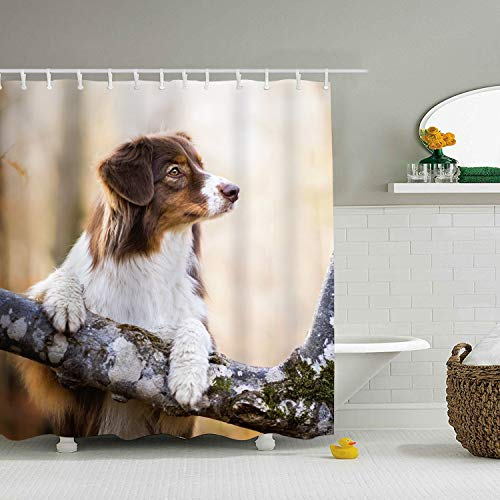 Animal Australian Shepherd Dog Muzzle Mildew Proof and Waterproof Washable Printed Polyester Shower Curtain for -