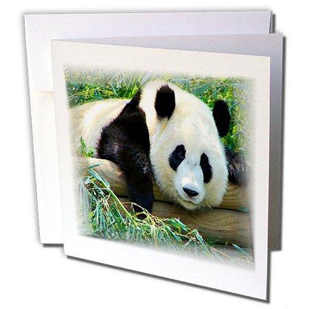 3dRose Giant Panda Bear Will Charm You Heart Greeting Cards, 6
