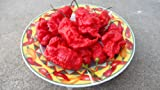 Jay's Red Ghost Scorpion Dried 6 Chile Peppers