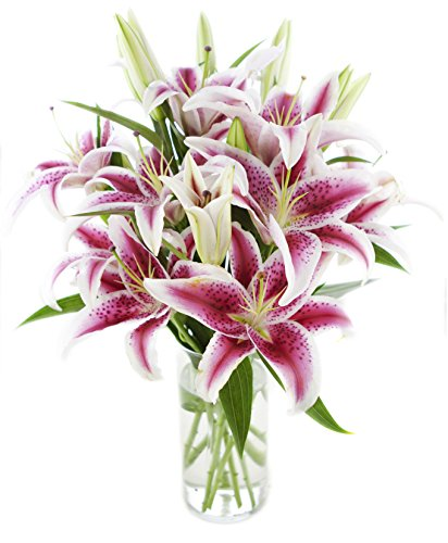 Deluxe Pink Lily Bouquet of 13 Stems Stargazer Lilies with Vase