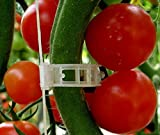 tomato design - Plant Clips Support Tomatoes, Peppers, Vine Plants & Flowers to Grow Upright: 100 Plant Clips