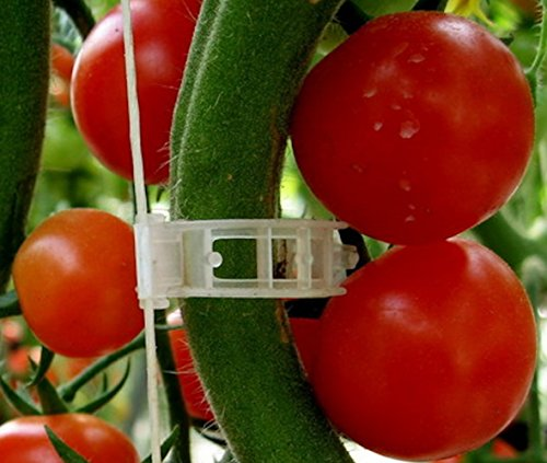 Plant Clips Support Tomatoes, Peppers, Vine Plants & Flowers to Grow Upright: 100 Plant Clips (Daisy Plant Clips compare prices)