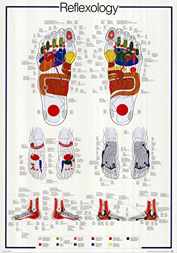 Reflexology Poster 27 x 39in (Poster Reflexology)