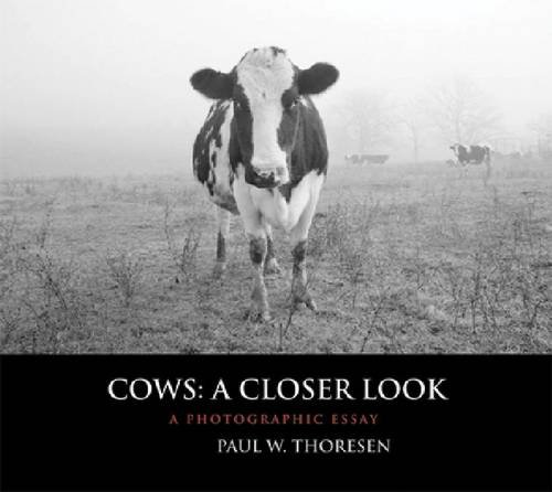 Cows: A Closer Look: A Photographic Essay PDF