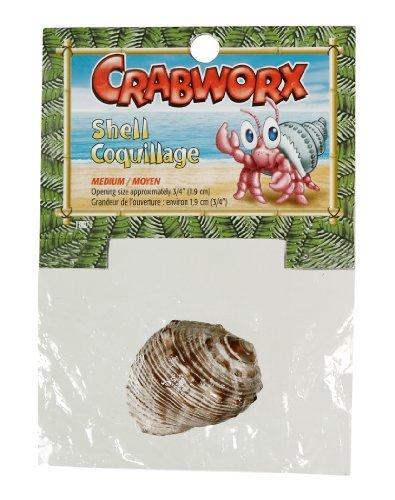 Crabworx Shell - Crabworx Shell, Medium by Crabworx