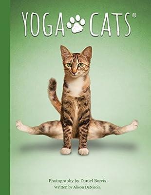 Amazon.com: Yoga Cats Deck and Book Set (9781572818743 ...