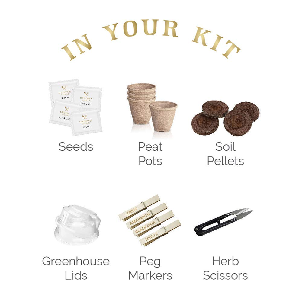 Indoor Herb Garden Starter Kit - Growing Seed Set Gardening Gifts for Women or Men with 100% Non GMO Heirloom Seeds (Basil, Cilantro, Parsley, Chives) Planter Peat Pots, Peg Markers, Scissors + Soil by Uptown Farmer (Image #3)