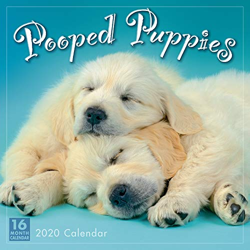 Pooped Puppies 2020 Calendar