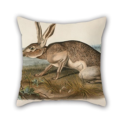 Loveloveu Throw Pillow Covers Of Oil Painting John Woodhouse Audubon - Texian Hare (Lepus Texianus),for Boys,shop,deck Chair,home Office,office,lover 20 X 20 Inches / 50 By 50 Cm(two Sides)
