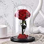 SW-Glass-Rose-Preserved-Real-Rose-in-Glass-Dome-Gift-Eternal-FlowerBeautiful-Creative-Gift-for-Valentines-Day-Mothers-Day-Christmas-Anniversary-Birthday-Thanksgiving-red