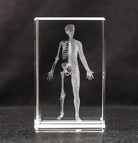 Human Body 3d Laser 1lb Crystal, Anatomy, Half Man Skeleton