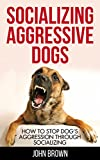 Socializing Aggressive Dogs: How to Stop Dog's Aggression Through Socializing