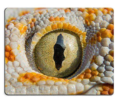 Price comparison product image MSD Mouse Pad Natural Rubber Mousepad IMAGE ID 29201593 Close up Gecko of northern Thailand