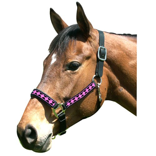 - Intrepid International Leather Crown Diamond with Padded Nose Halter, Black/Neon Pink, Yearling