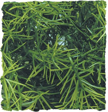 Picture of Zoo Med Naturalistic Bush Plant Cashuarina, Large