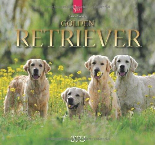 Golden Retriever 2013 - Original Stürtz-Kalender