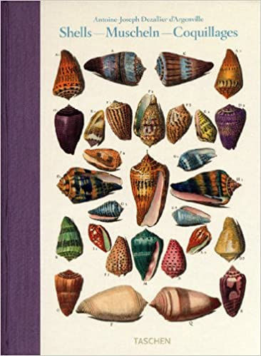Shells / Muscheln / Coquillages: Conchology, Or The Natural History Of Sea, Freshwater, Terrestrial And Fossil Shells (English, French And German Edition) Download