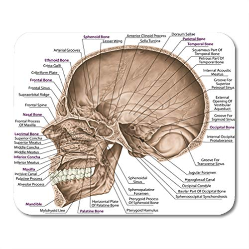 - Semtomn Gaming Mouse Pad Cranial Cavity The Bones of Cranium Head Skull Openings 9.5