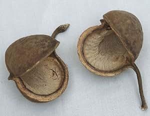 Budda Nuts Natural