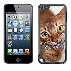 Vortex Accessory Carcasa Protectora Para Apple Ipod Touch 5 - Orange American Shorthair Chausie Cat -