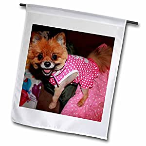 Lenas Photos - Pets - Cute Pomeranian showing off her new dress and haircut - 12 x 18 inch Garden Flag (fl_59220_1)